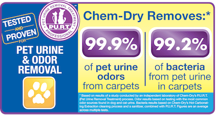 Chem-Dry of Yuma County removes 99.9% of Pet Urine Odors from carpets, as well as 99.2% of bacteria from pet urine in carpets
